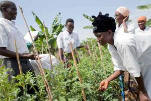 The Food and Agriculture Organization works tirelessly at the grass roots.
